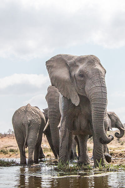 Tours-for-South-Africa-Knysna-herd-of-elephants