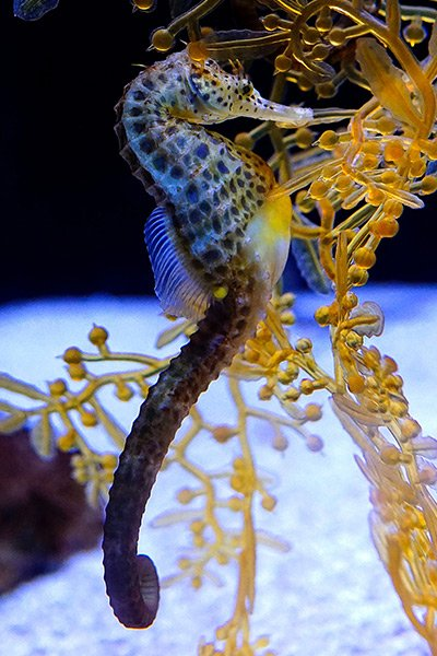 TFSA-Excursion-Info-Seahorse-Aquarium