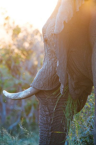 TFSA-Excursion-Knysna-Elephant-Park