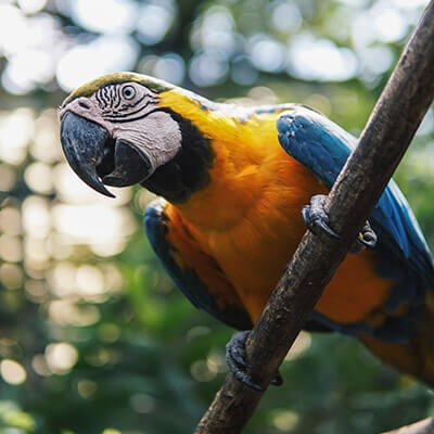 TFSA-Excursion-Info-Birds-of-Eden