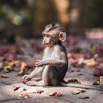 TFSA-Excursion-Info-Monkeyland-sm
