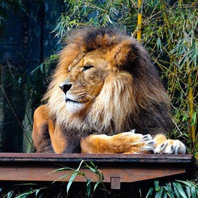 TFSA-Excursion-Info-Tenikwa-Wild-Cats